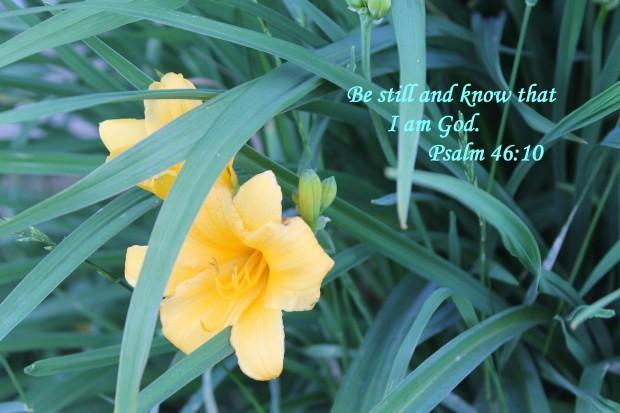 Stella Del Oro Lily with verse