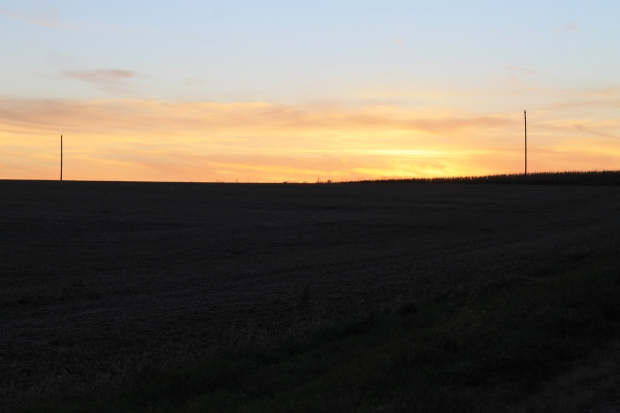 Bean Field at Dusk.JPG