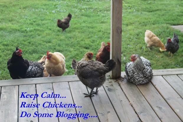 Raise Chickens.jpg