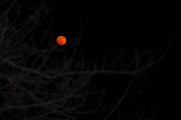 April Moon