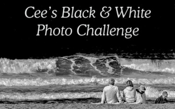 Cee's Black & White Challenge Badge