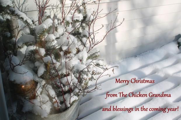 IMG_4999 Merry Christmas